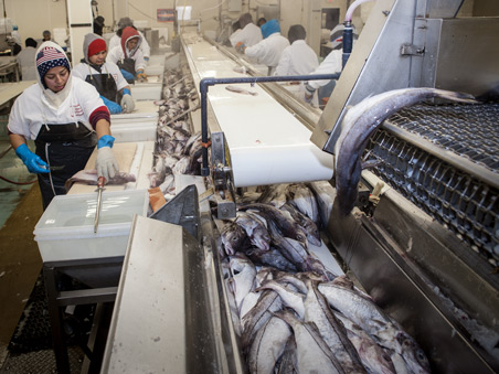 Channel Fish Processing: Boston, MA